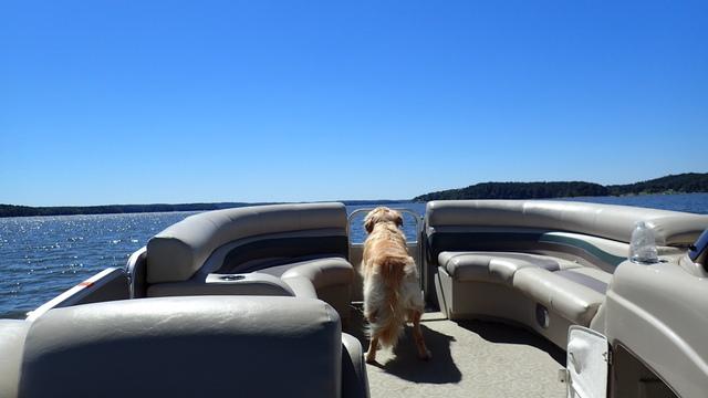 Golden retriever on a pontoon boat.