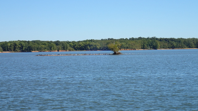 A Bird Island on the Cumberland River