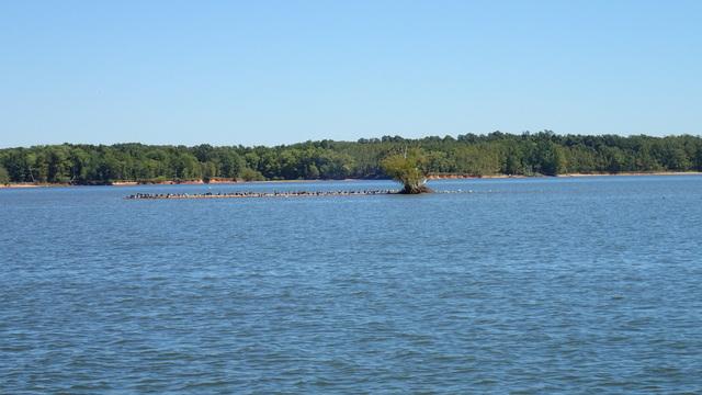 A Bird Island on the Cumberland River